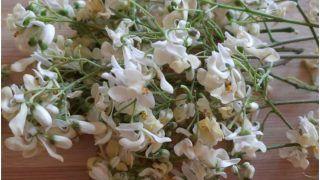 Drumstick Flower Health Benefits: रोजाना करें सहजन के फूलों का सेवन, मिलते हैं ये 4 फायदे