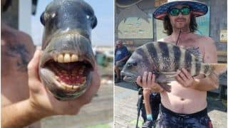 Man Catches Fish With Human-Like Teeth, People Are Freaked Out | See Pictures