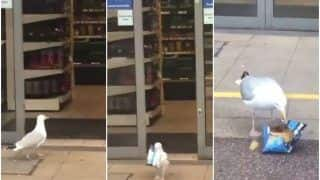 Viral Video: Bird Goes To The Mall For Shopping. Here's What He Got