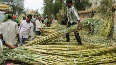 उत्तर प्रदेश में गन्ने का खरीद मूल्य प्रति क्विंटल बढ़ा, जानें अब कितनी हुई कीमत