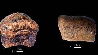 Rare Discovery: New Species of Jurassic Era Hybodont Shark Discovered in Jaisalmer