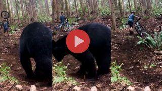 Bhalu Ka Hamla: जंगल में खतरनाक भालू से हो गया सामना, शख्स भागा तो पीछे पड़ गया | Viral हुआ Video