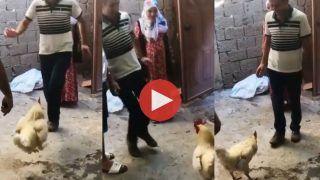 Murge Ka Dance: कभी मुर्गे को डांस करते देखा है? नहीं तो आज देख लीजिए ये Viral Video
