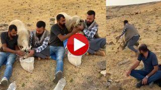 Funny Video: रोटी चुराकर भागने लगी भेड़, उसके बाद जो हुआ हंसी नहीं रुकेगी | Viral हुआ ये मजेदार वीडियो