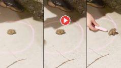 Mendhak Ka Video: फर्श पर मेंढक के चारों तरफ बना दिया गोल घेरा, उसके बाद जो दिखा यकीन नहीं होगा | देखिए ये वीडियो