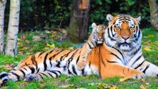 Rajaji Tiger Reserve Now Opened For Safari Throughout The Year - Start Planning Your Weekend Getaway!