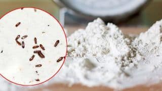 Insects Or Bugs Spoiling Your Atta This Monsoon? These 3 Easy Tips Would Help