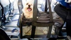 Business Class Cabin For Dog: शख्स ने पालतू कुत्ते के लिए बुक किया पूरा एयर इंडिया बिजनेस क्लास केबिन