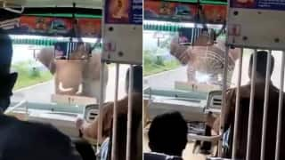 Elephant Attacks Bus & Shatters Windshield in Tamil Nadu, Driver Praised For Calm Handling of Situation | Watch
