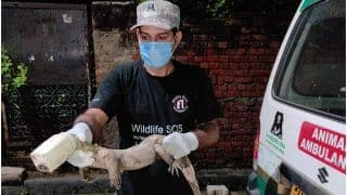 4-Feet-Long Monitor Lizard's Neck Gets Stuck in Plastic Jar, Wildlife SOS Comes to Its Rescue