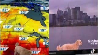 Viral Video: Dog Adorably Interrupts Live Weather Forecast, Netizens Can't Get Enough | Watch