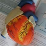 4 Simple and Affordable Lifestyle Ways to Prevent Heart Attacks