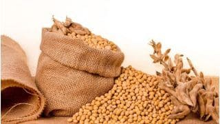 Can Soy Affect Men's Sexual Health? Find Out Here