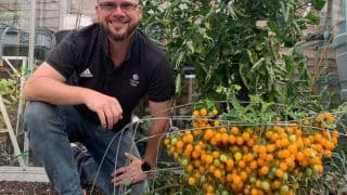 Man Grows 839 Cherry Tomatoes from a Single Stem, Makes World Record
