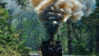 THIS Jungle Tea Toy Train Safari Will Take Tourists Through The Forests of West Bengal