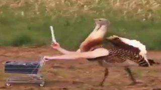 Birds Amazing Viral Video: चिड़ियों को सेल्फी लेते, लैपटॉप पर काम करते देखा है कभी, नहीं ना...तो देखिए ये मजेदार वीडियो