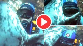 Viral Video: समुद्र में स्कूबा डाइवर को देखते ही गले लग गई ये ग्रे सील, फिर जो हुआ भावुक कर देगा | देखिए ये Video