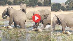 Hathi Magarmachchh Ki Fight: हाथी से भिड़ने की गलती कर बैठा मगरमच्छ, फिर जो हुआ यकीन नहीं करेंगे | देखिए ये Video