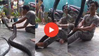 Cobra Ka video: घर में आ गया 15 फीट लंबा खतरनाक कोबरा, फिर जो हुआ देखकर हिल जाएंगे | Viral हुआ ये Video