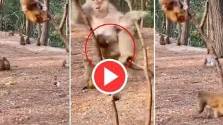 Bandar Ka Video: मां से छिपकर पेड़ पर चढ़ गया क्यूट बंदर, फिर जो किया हंसी नहीं रुकेगी | दिन बना देगा ये Video