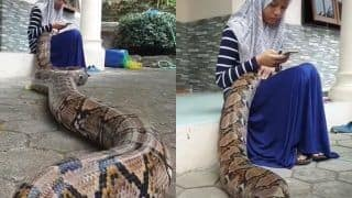 Video of Giant Snake Sleeping on Girl's Lap Goes Crazily Viral | WATCH