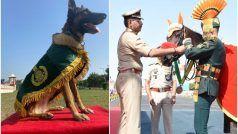 Bahadur Kutta aur Ghoda: बहादुरी में बड़ों-बड़ों को मात देने में चैंपियन में है ये कुत्ता और घोड़ा, मिले स्पेशल मेडल