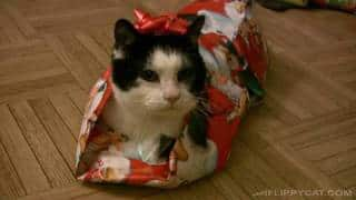 This Christmas learn how to gift wrap your cat!